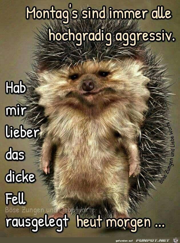 Montag Guten Morgen Bilder Tiere Guten Morgen Witzig Und
