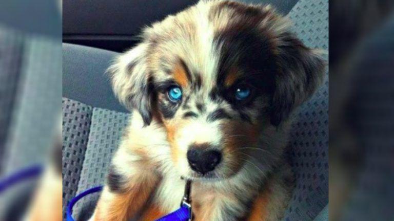 21 adorable dog crossbreeds you've probably never heard of
