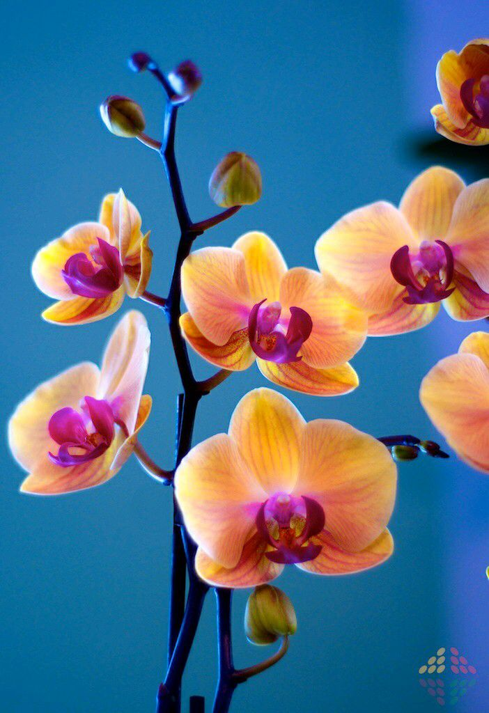 Orquideas Beautiful Orchids Beautiful Flowers Orchids
