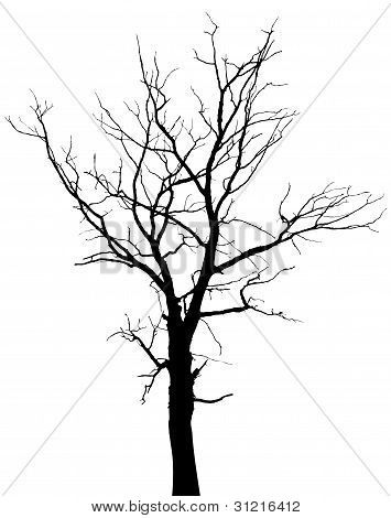 Printable Pictures Of Trees Without Leaves Silhouette Of Dead Tree Without Leaves Stock Vector Stock Photos Tree Drawing Tree Silhouette Black Tree