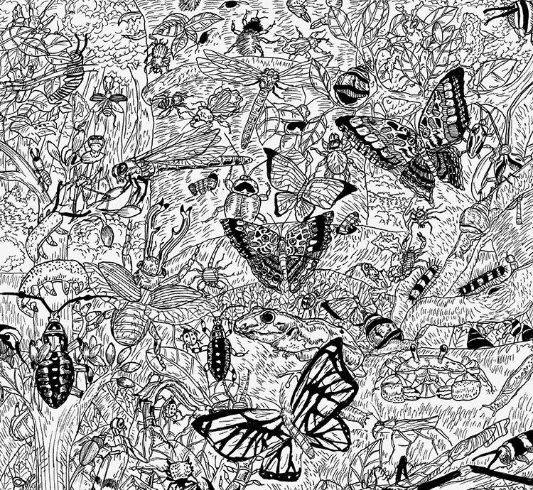 Niño Prodigio de 11 Años Crea Dibujos Increíblemente detallados de la Vida Silvestre