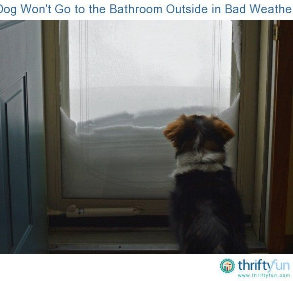 Dog Won T Go To The Bathroom Outside In Bad Weather Dog Bathroom Dogs Cute Little Animals