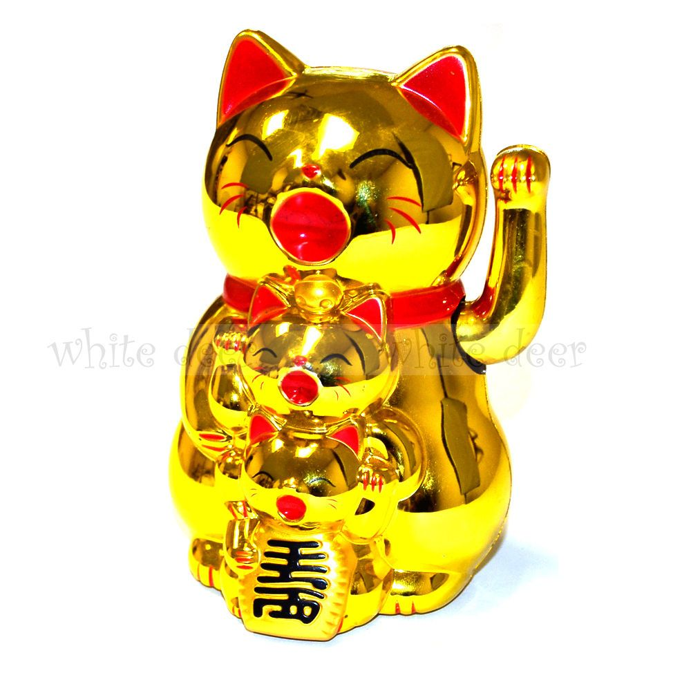 Pin On Available For Reservation Golden Bri Kittens