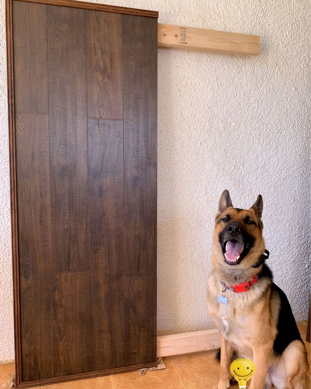 DIY Headboard project update: Yehey pawrents are happy & me the headboard turned out nice & 99% done! Furmom have to pain the legs & then ready to install to our bed! 🙌🏼😁 . . . . #germanshepherd #gsd #gsdofinstagram #mansbestfriend #happydog #guamdogs #headboardproject #diy #queensizeheadboard #homeproject #furbaby #dog #dogs #dogsarefamily #ilovemydog #ilovedogs #doglover #gsdlover #petsarefamily #furmom #furmommy #bigpaws #adorabledog