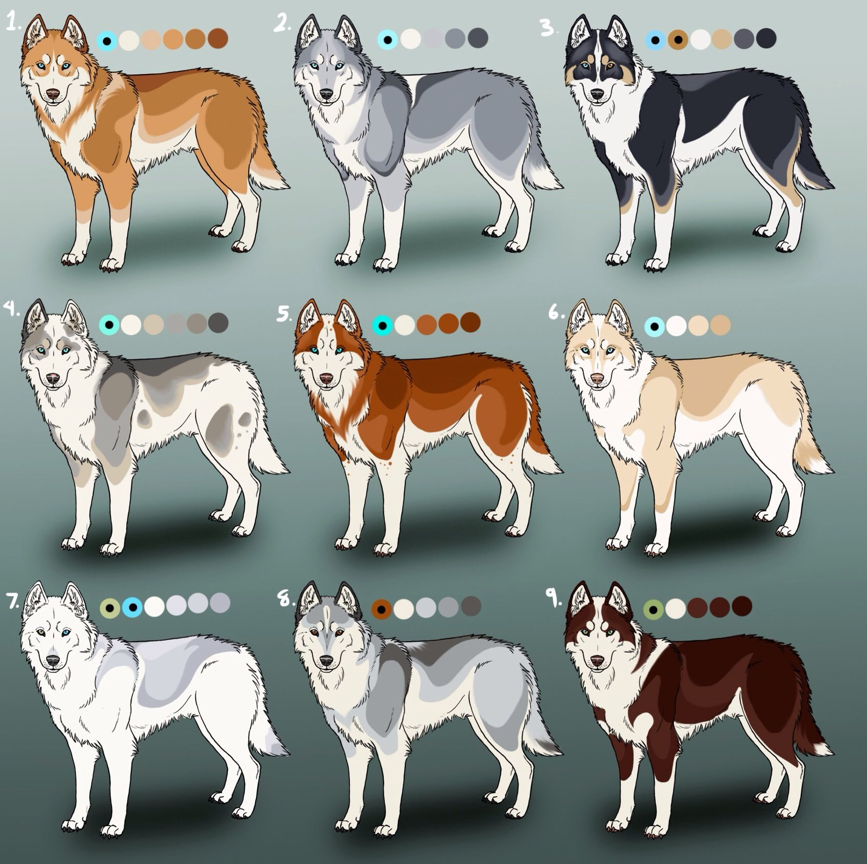 Colors Husky Colors Husky Dogs Husky Eyes