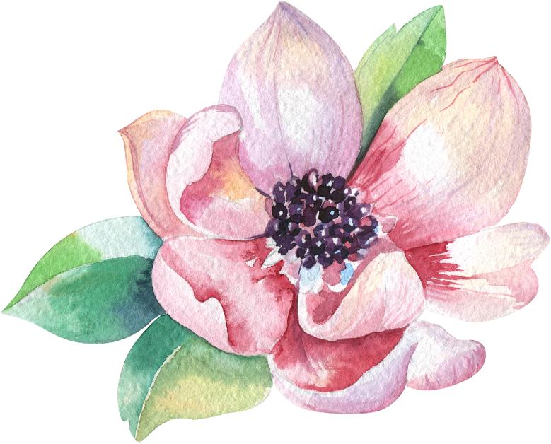 Magnolia Home Akvarelnye Cvety Cvetochnye Kartiny Cvetochnye Fony