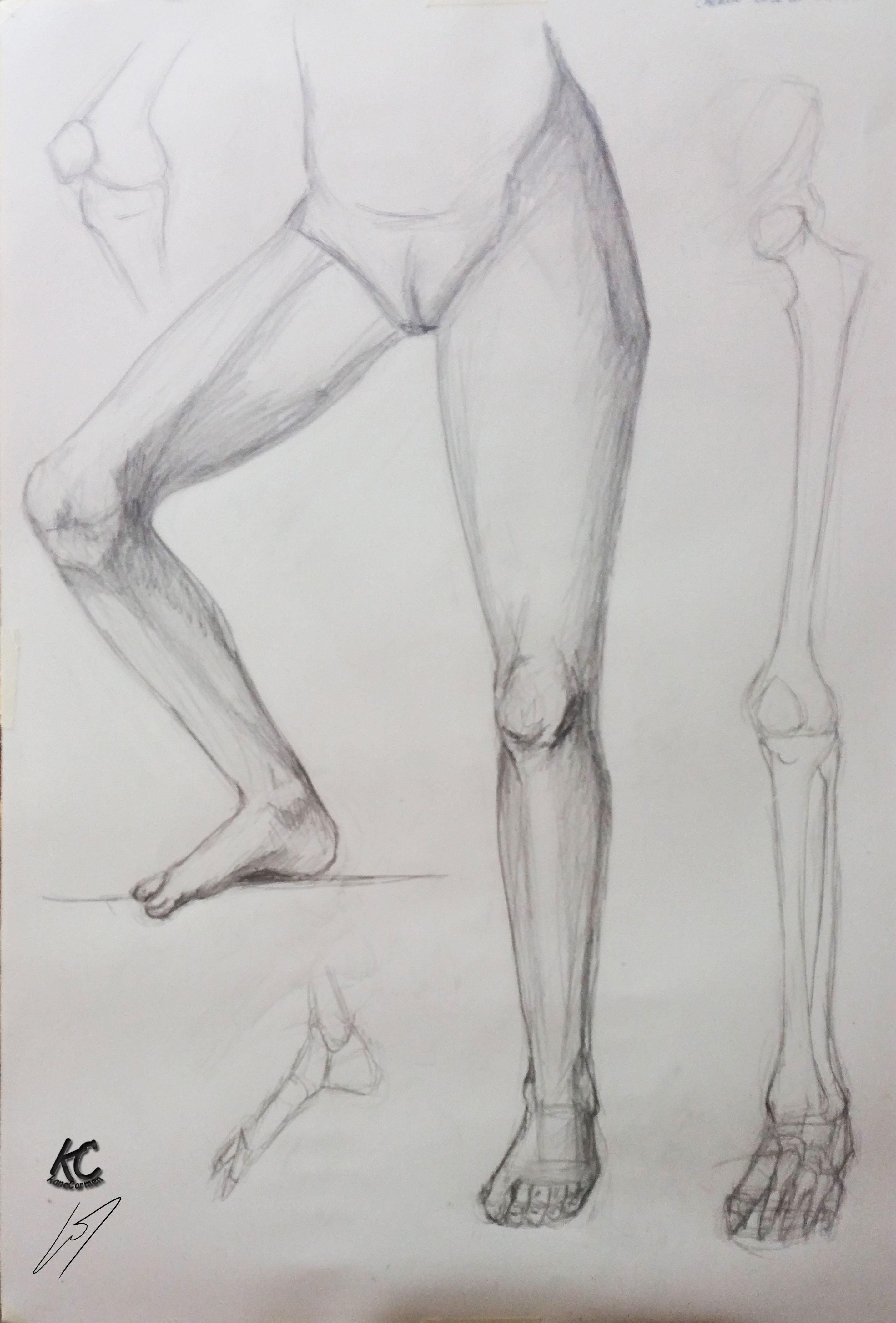 4º Estudio. Extremidades inferiores. | Mis estudios de anatomía ...