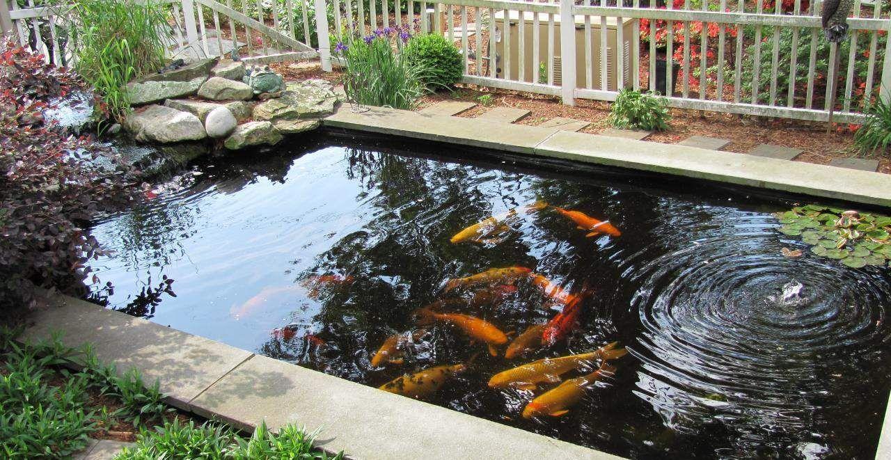 Koi Ponds   Essential Features Of Koi Pond Design U2013 Indoor And Outdoor  Design Ideas