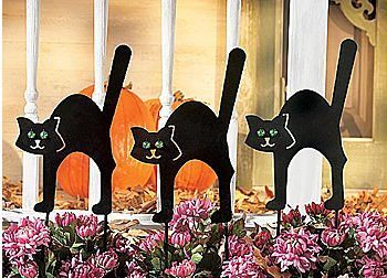 Black Cat Halloween Decoration Ideas For Indoor And Outdoor Spooky Fun Black Cat Decor Halloween Decorations Black Cat Halloween