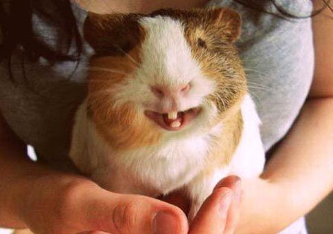 """Mc., 21 MAY 2014   FOTOGRAFIA - """"Sonrisas de animales"""" (FUENTE: XINHUA)."""