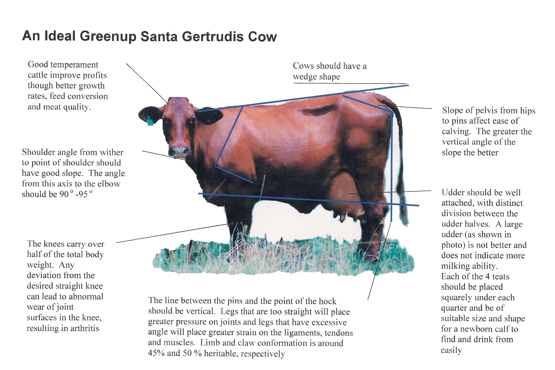 Outstanding Cow Head Anatomy Vignette - Anatomy Ideas - yunoki.info