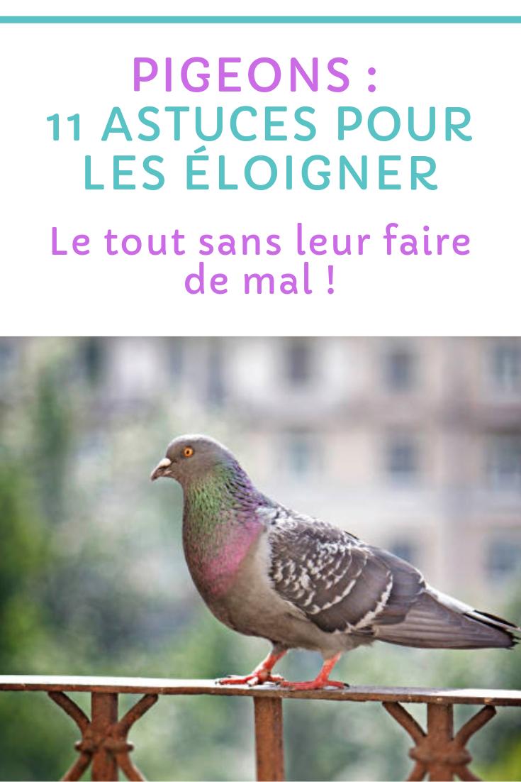 Comment Faire Fuir Les Pigeons : comment, faire, pigeons, Pigeons, Astuces, éloigner, Faire, Pigeons,, Pigeon,