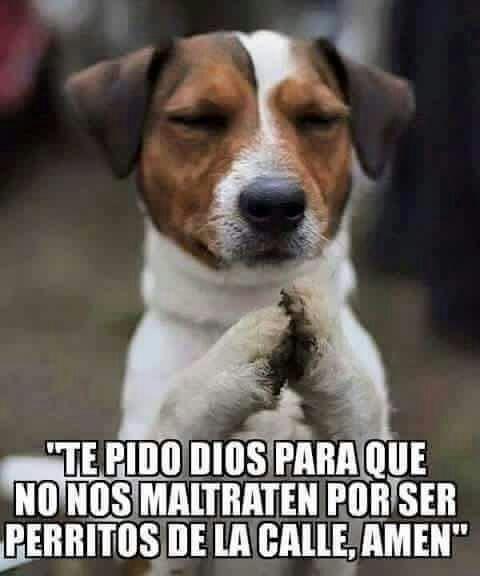 Que el Dios de la Vida escuche tu oración, querido perrito, y que los humanos aprendamos de una buena vez...