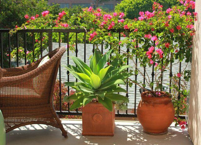 Balkon Sichtschutz Ideen Gelaender Bepflanzung Kletterpflanzen