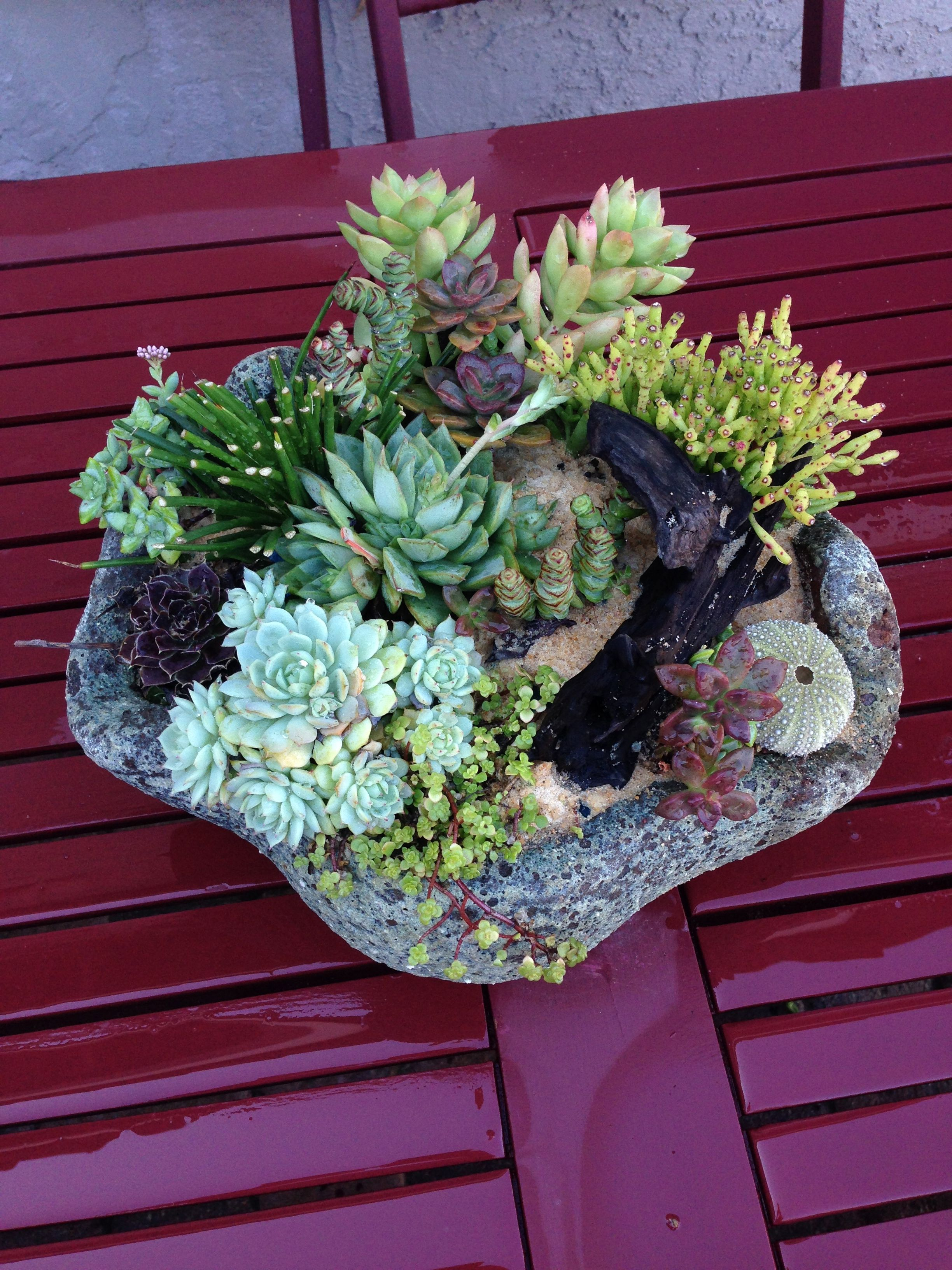 Seashell Planter with succulents