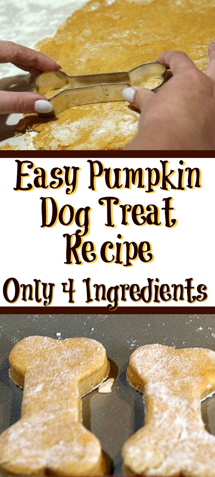This easy Pumpkin Dog Treat Recipe is perfect to make for your dog With only four ingredients they are also super quick to whip up a batch via CookEatGo