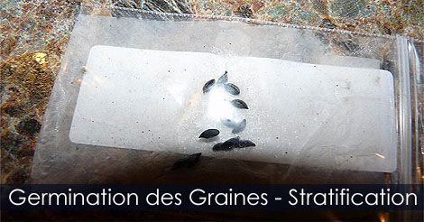 Germination des Graines par Sratification - Réfrigérer les semences pour les faire germer. Instructions : http://www.jardinage-quebec.com/guide/stratification-des-graines/stratifier-semences-7.html