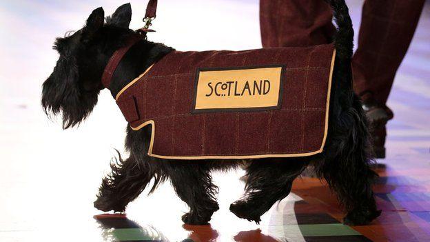How Scottish are Scottie dogs? Scottie dog, Scottie
