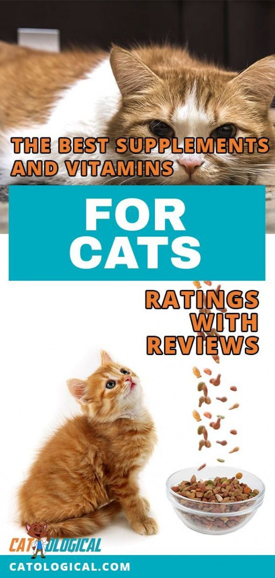 As a cat lover you adore your furry little babies and you know they might need additional vitamins and minerals to keep in tiptop shape so here is a list of things to kno...