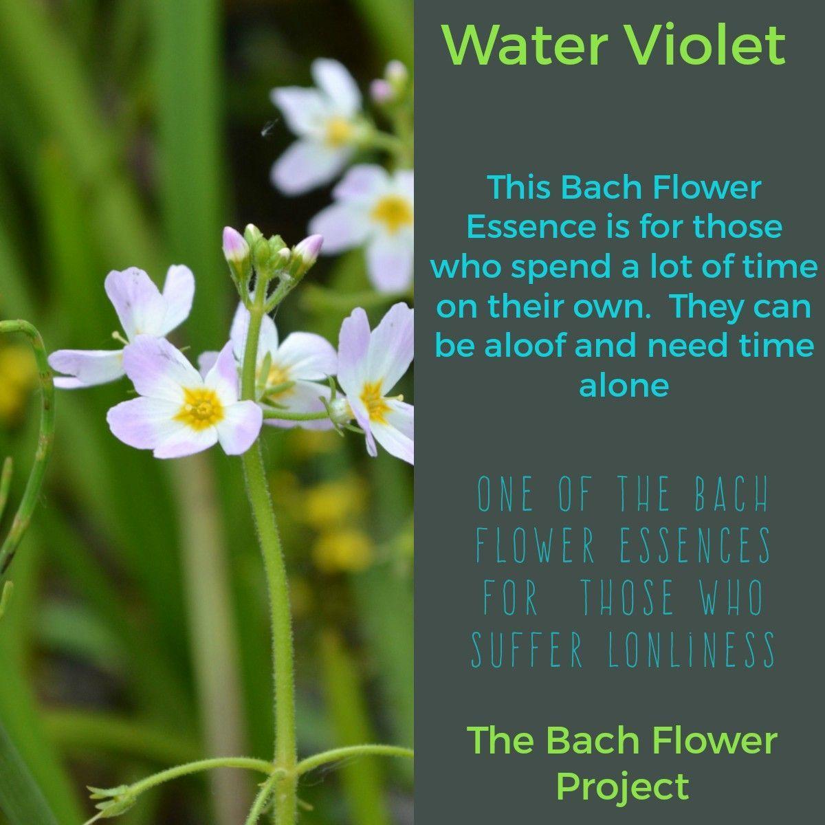 Resultado De Imagen Para Flores De Bach Water Violet Bach Flower Remedies Bach Flowers Flower Essences Remedies