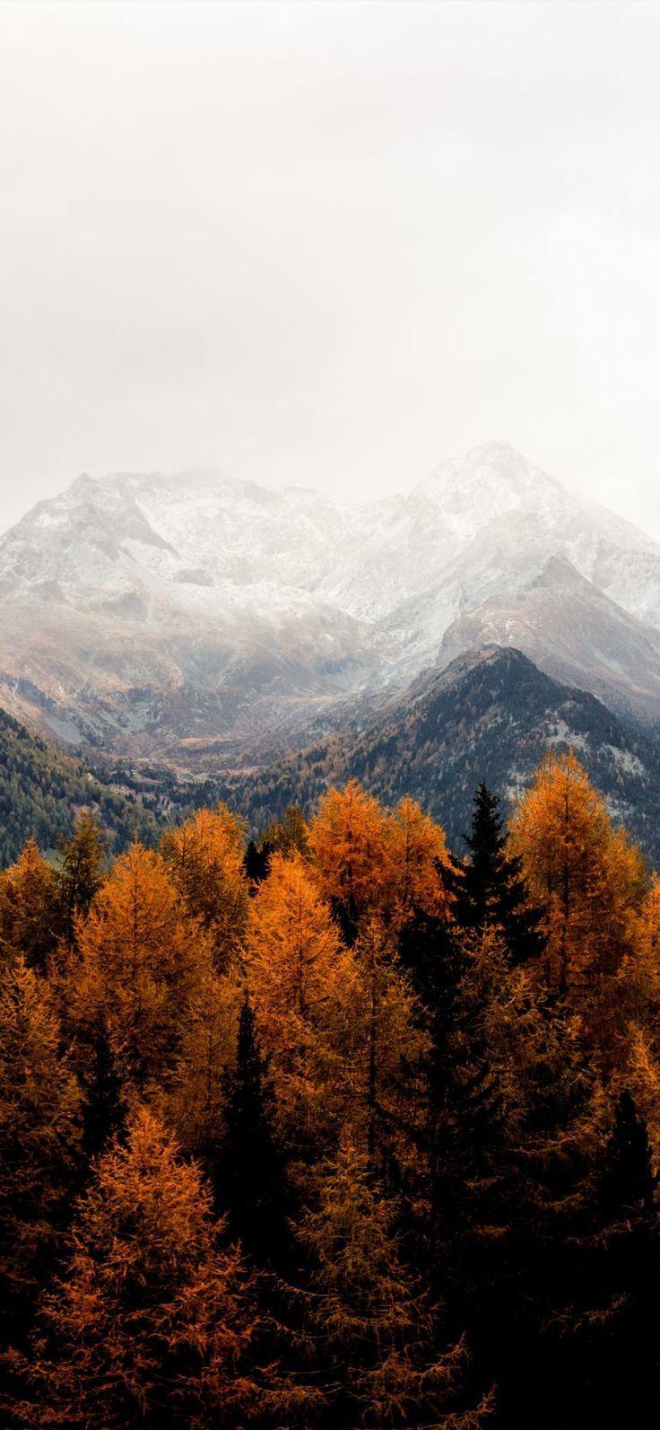 autumn fall iphone x wallpaper #falliphonewallpaper