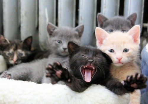 There is always one kid, in every group that ruins the photo for the rest  of the group. . . | Crazy cats, Kittens, Pretty cats