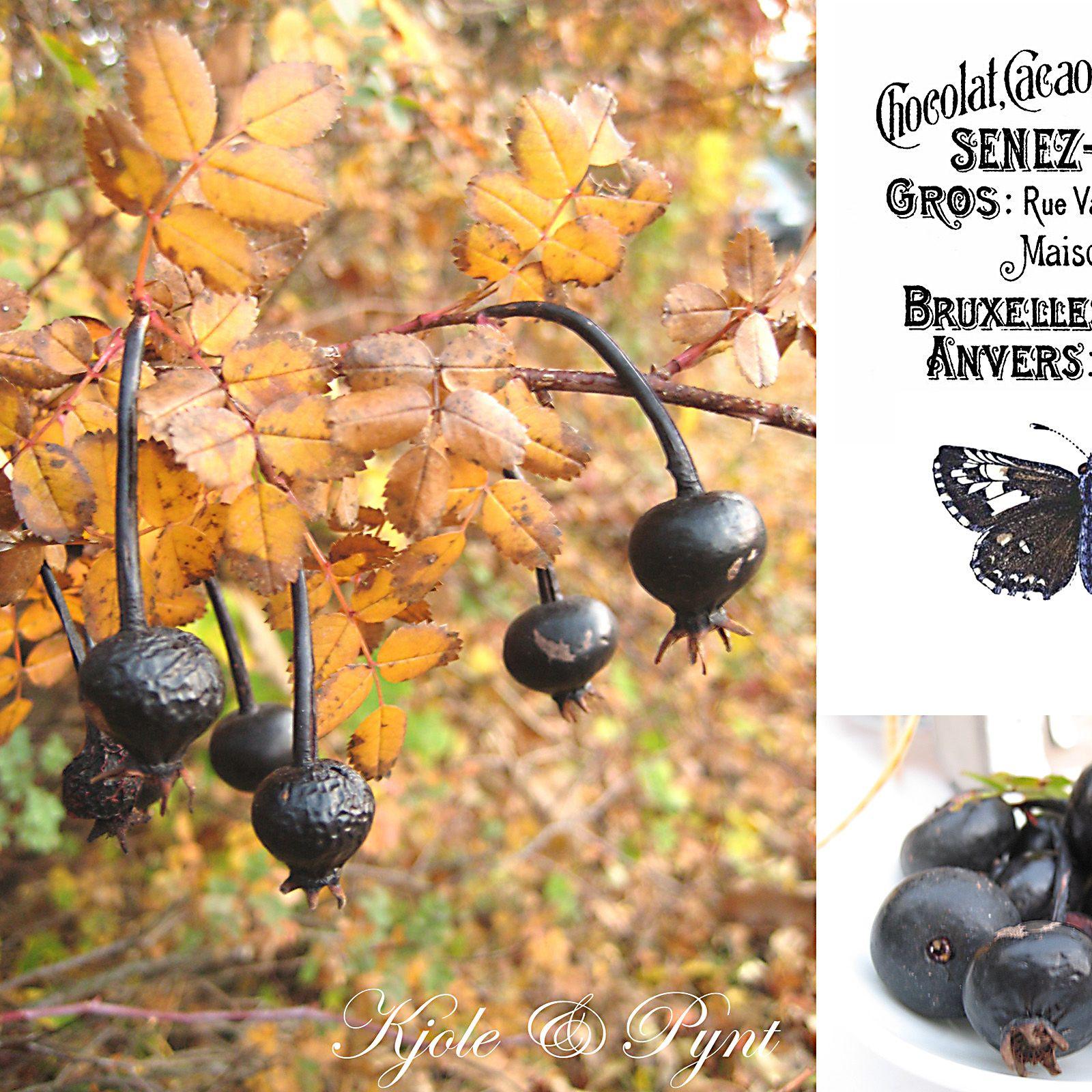 Ich finde den Kontrast sehr schön : zartes gelbes Herbstlaub und schwarze Hagebutten.
