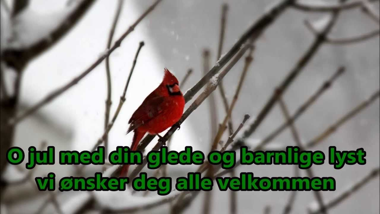 Norwegian Christmas Song   O Jul Med Din Glede