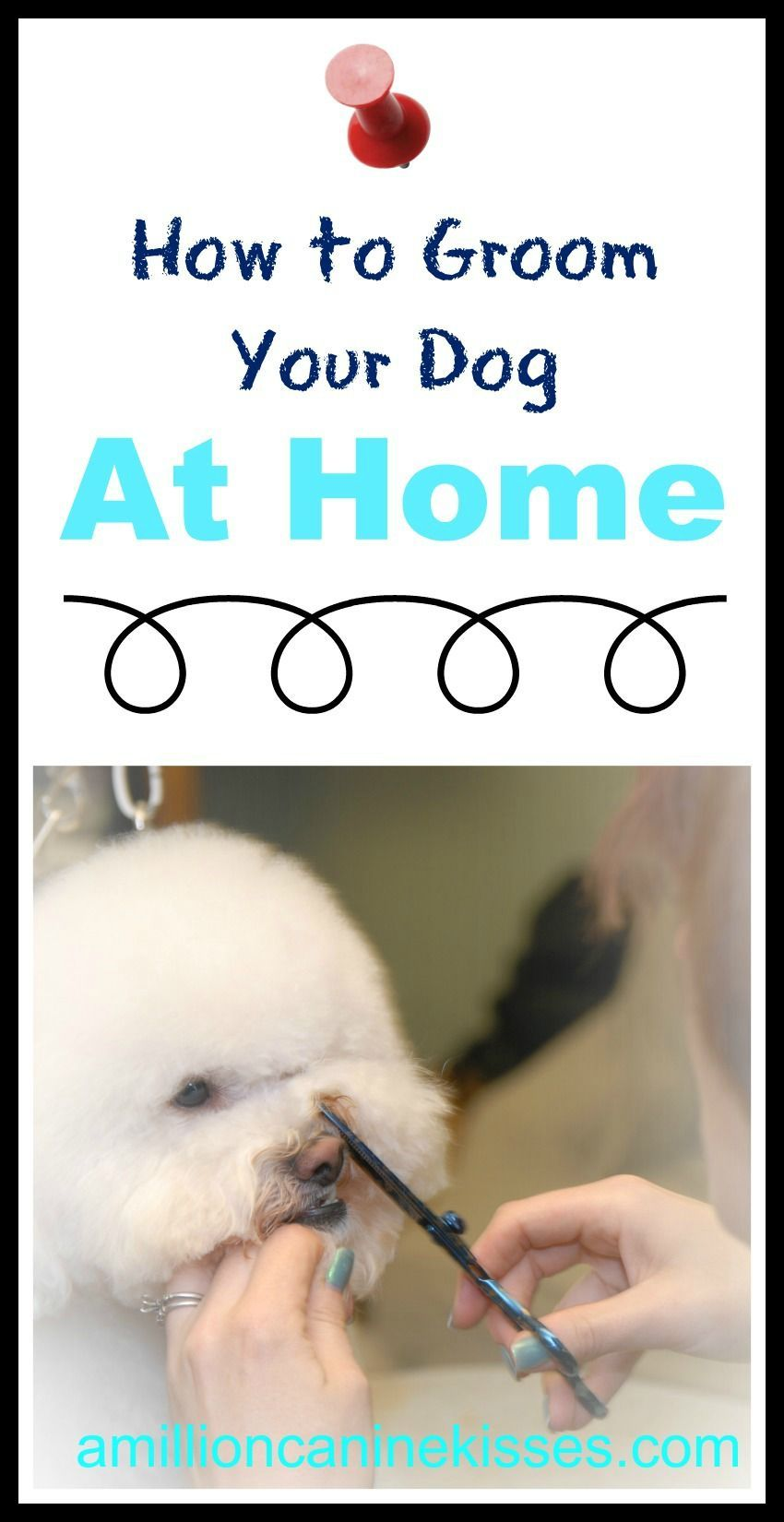 How to Groom Your Dog at Home Dog grooming business, Dog
