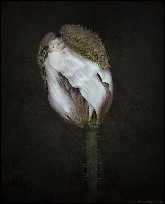 secrets of nature IX by Uwe Appelberg