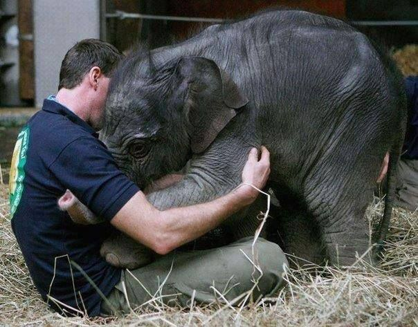 Baby elephant greets her keeper.