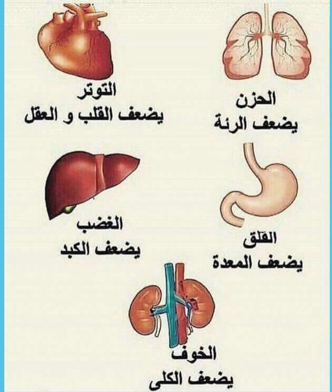 Pin By زهرة علي On معلومات Health Food Health