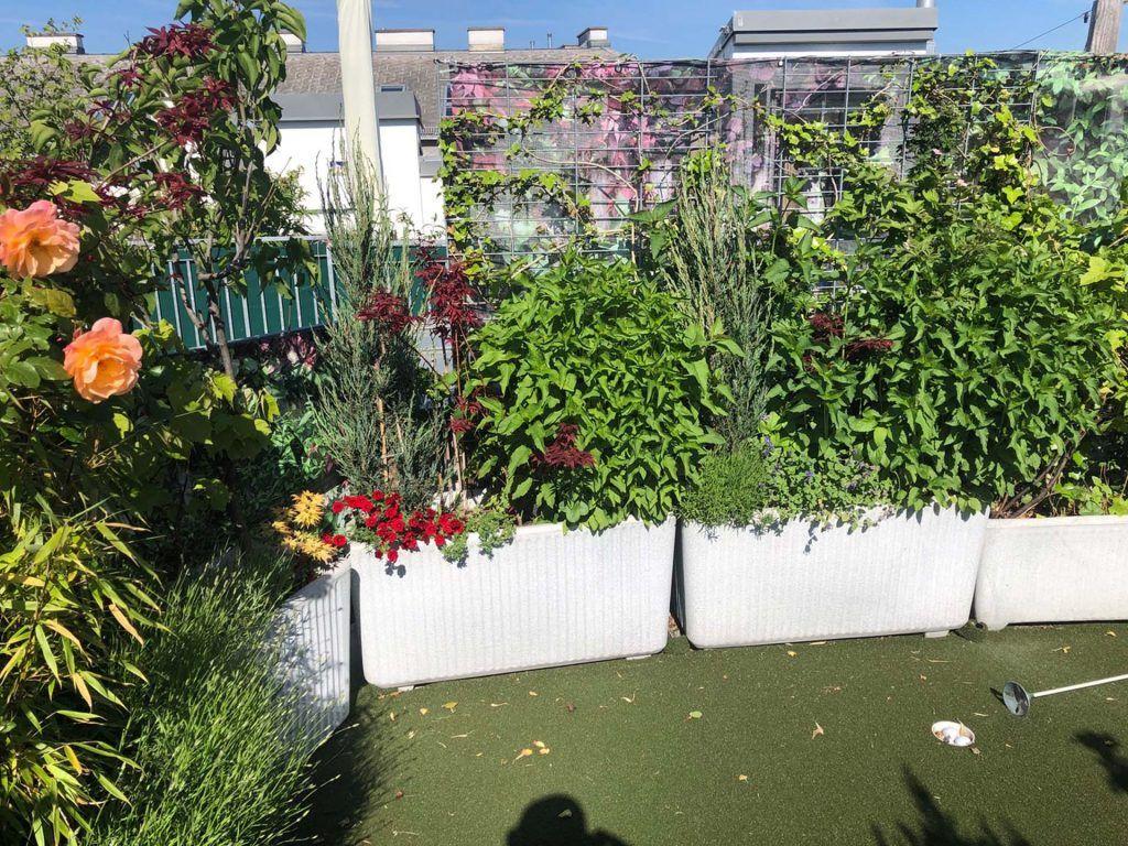 Wer Vermisst Jetzt Schon Den Sommer Sichtschutz Garten Ideen Gunstig Garten Garten Ideen