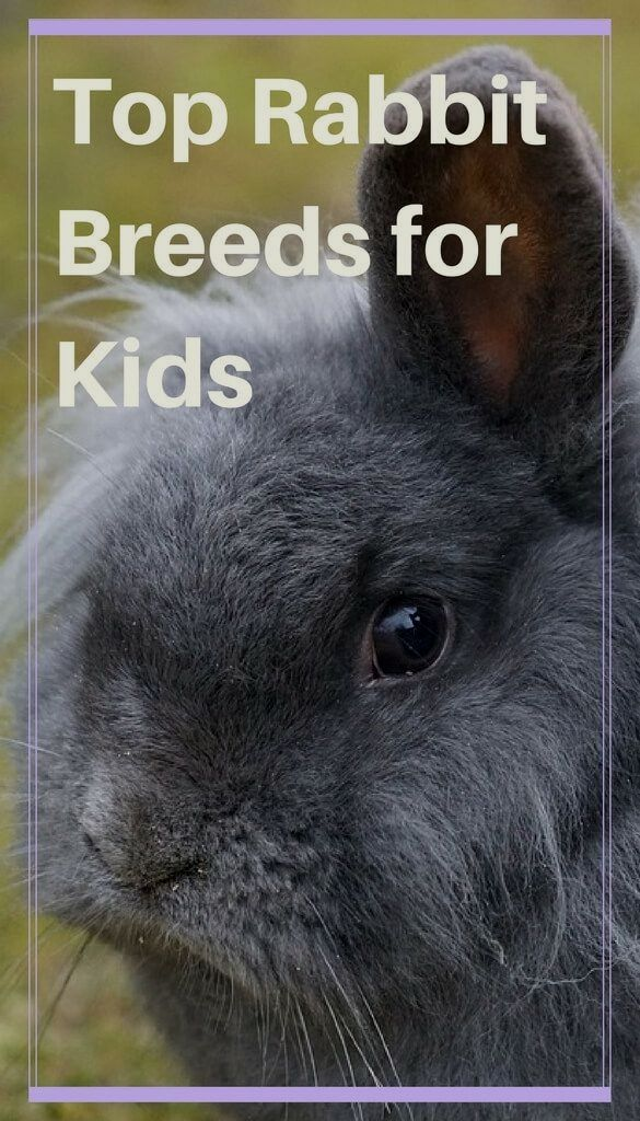 Things You Need To Know Before Buying A Rabbit Cute baby