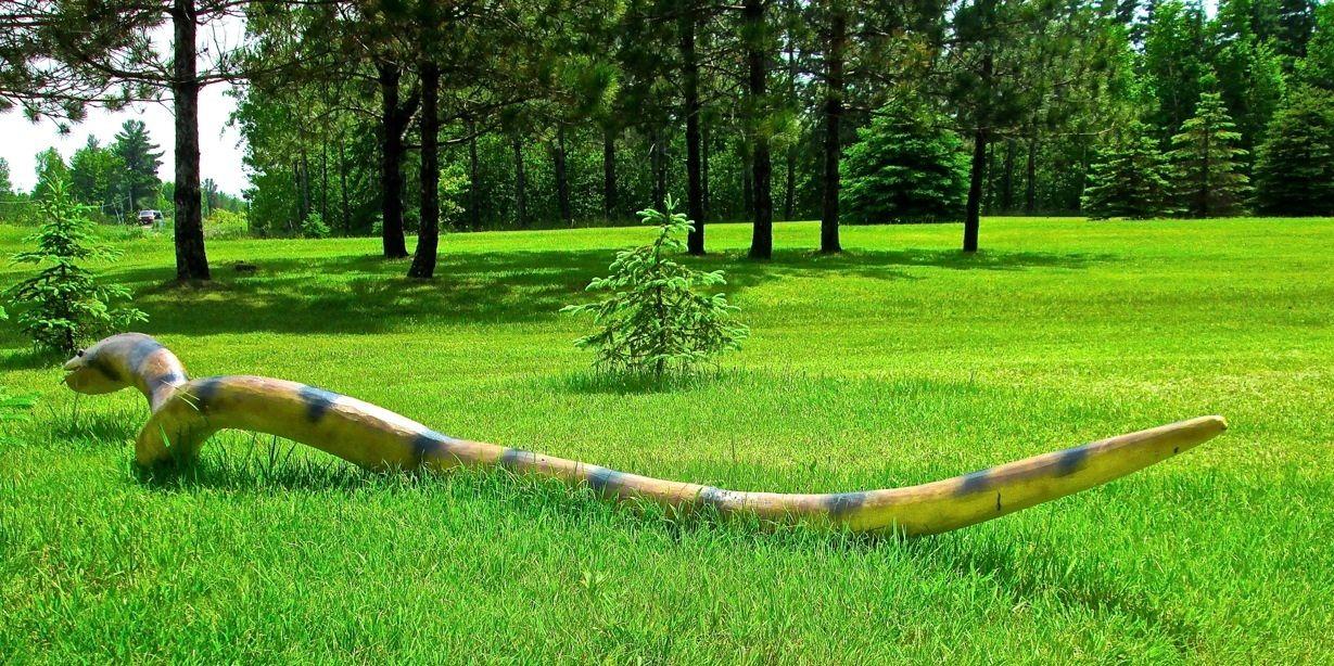How To Make Wood Anaconda Snakes from a Tree | Anaconda ...