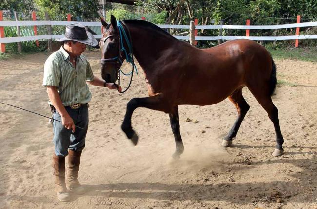 Usted puede ir a montar a caballo en Costa Rica en Monteverde. Es muy emocionante.