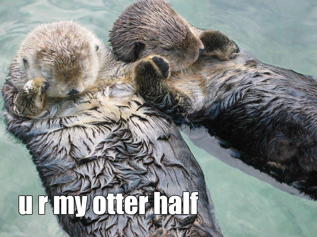 u r my otter half. gah cute