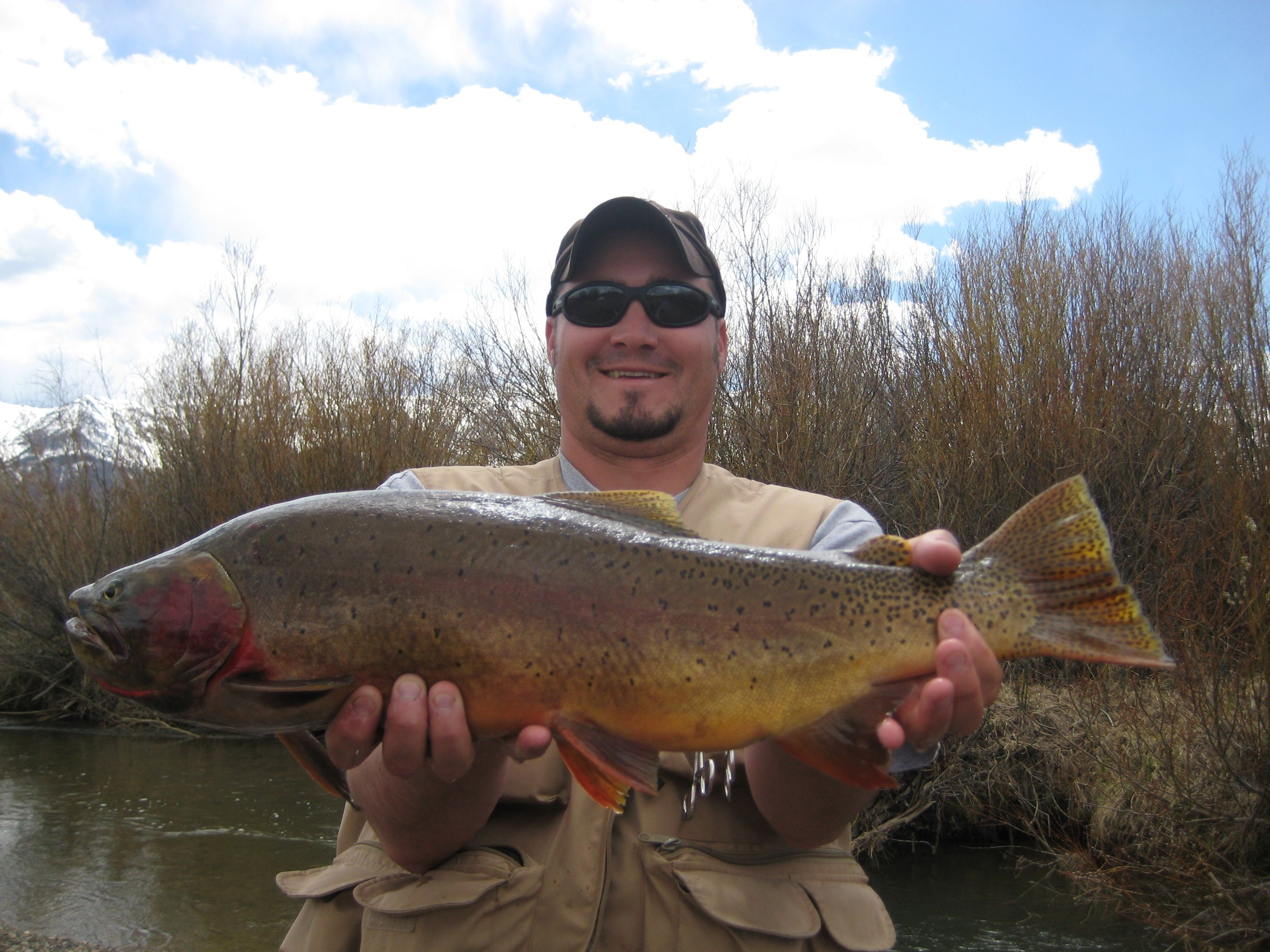 Hook into one of the giant yellowstone cutthroat who live for Rock creek fishing