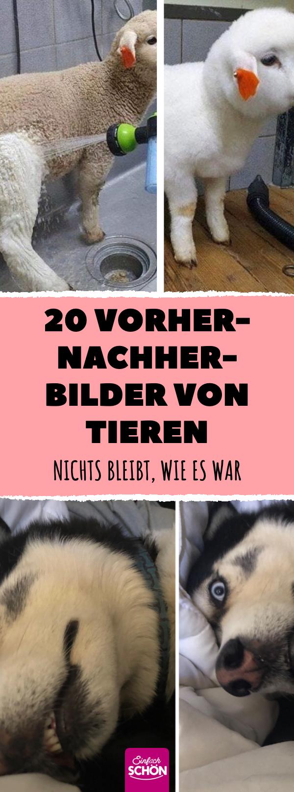 20 lustige Vorher nachher Bilder von Hunden, Katzen und Co ...