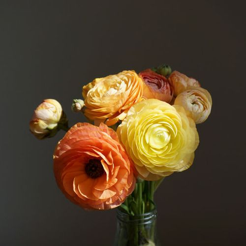 Ranunculus Flowers Dark Light Moody Colours Colour Inspiration Stilllife Inspiration Rustic House Bloom