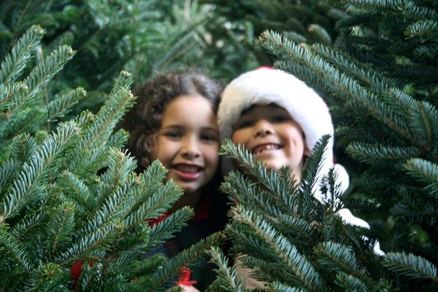 10 Popular Christmas Tree Farms In Dallas Ft Worth And