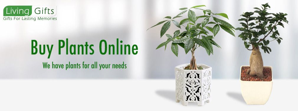 Flowering Plants In India Shop Plants Online India Feng