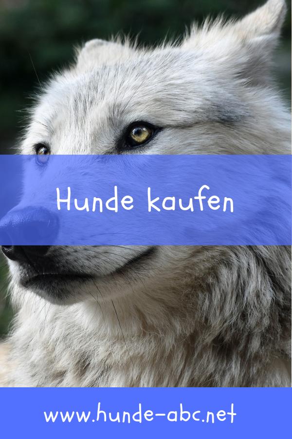 Hunde Kaufen Anschaffung Haltung Hunde Abc Allgemeine Infos Hunde Hund Anschaffen Wolle Kaufen