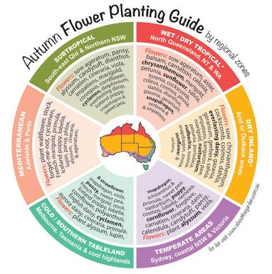 Flower seasons chart google search also spring planting guide by temperate zones australia http rh pinterest