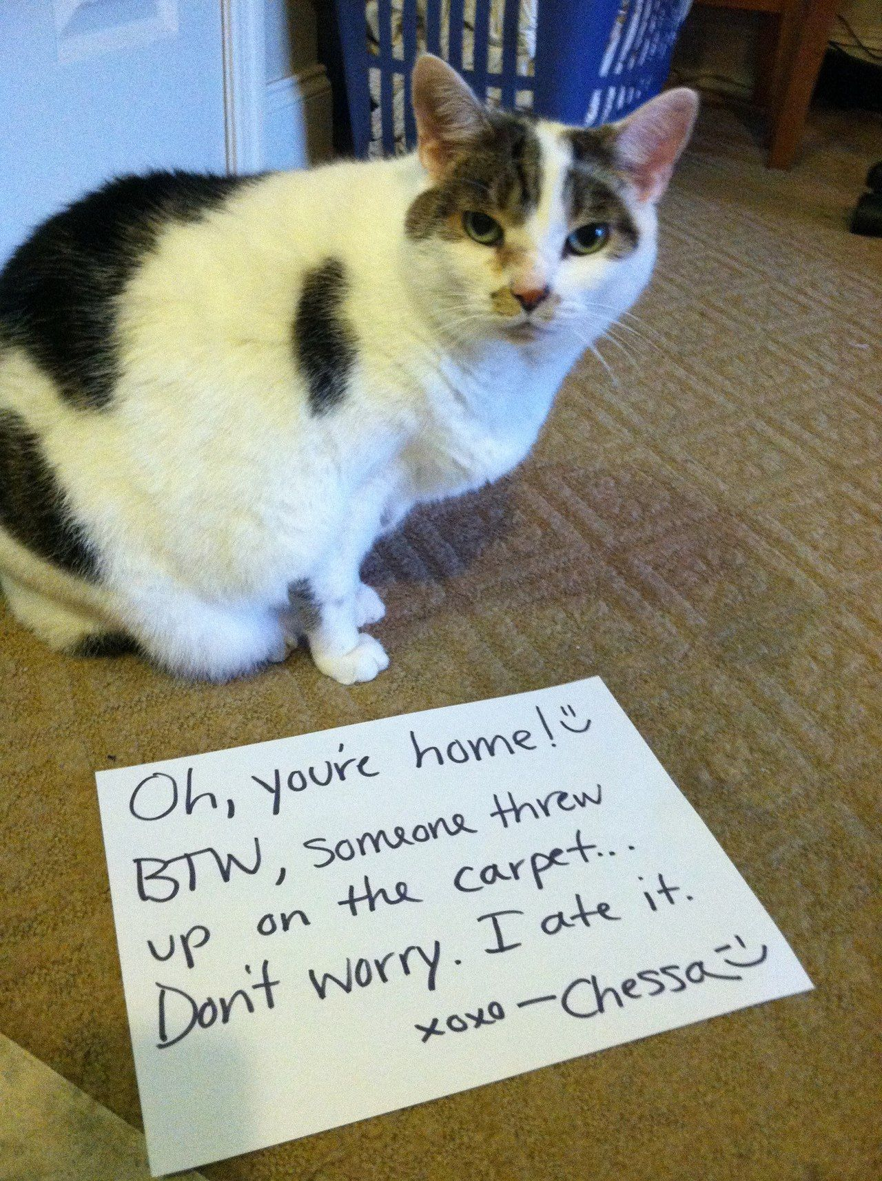 You're Cat shaming, Crazy cats, Funny animal memes