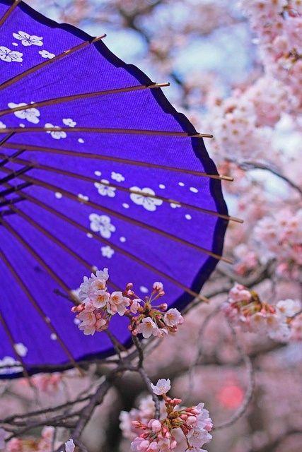 Zhizn Horosha Esli Schastliva Dusha Sakura Cherry Blossom Japanese Umbrella Japan