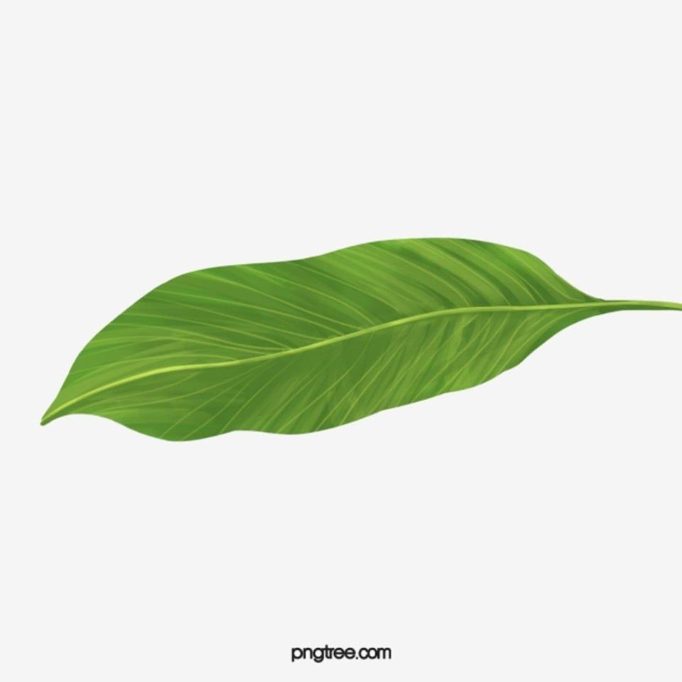 Tropical Banana Leaves Banana Clipart In Kind Leaf Wallpaper Png Transparent Clipart Image And Psd File For Free Download Leaf Wallpaper Banana Leaf Leaf Clipart