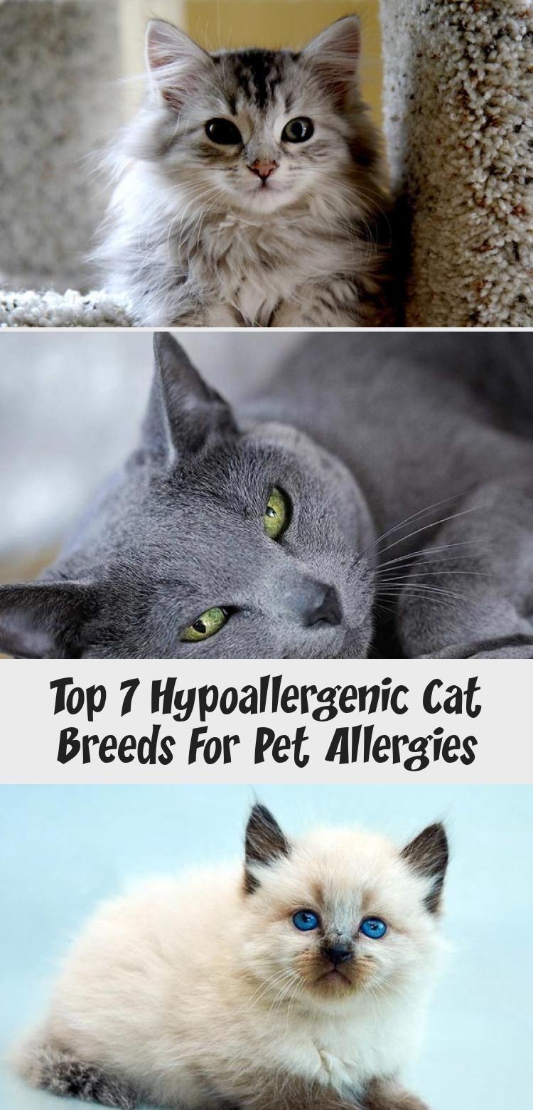 My Blog En Blog in 2020 Cat breeds hypoallergenic, Cat
