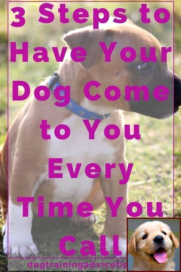 Dog Behavior Male Vs Female and Clicker Training Dogs Pdf