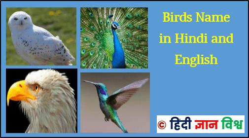 Birds Name In Hindi And English Birds Images See Https Hindigyanvishv Com 2017 11 Birds Names In Hindi English Html Names Hindi List Of Birds